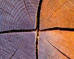 трещины в дереве